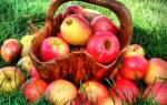 Можно ли есть яблоки при обострении гастрита